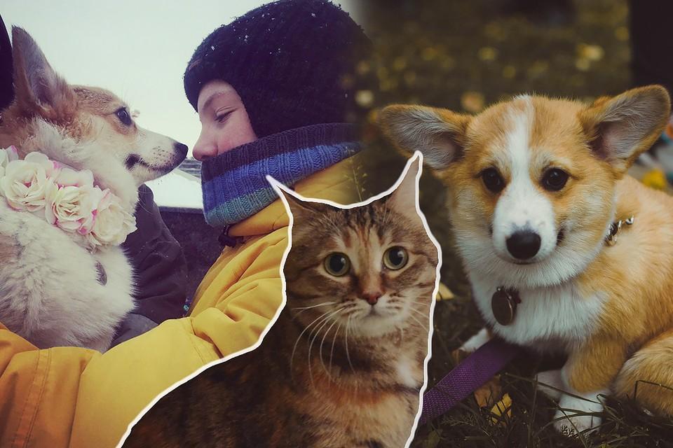 Корги Печенька и кошка Василиса всегда рядом с Кириллом, и отвлекают его в нужный момент.
