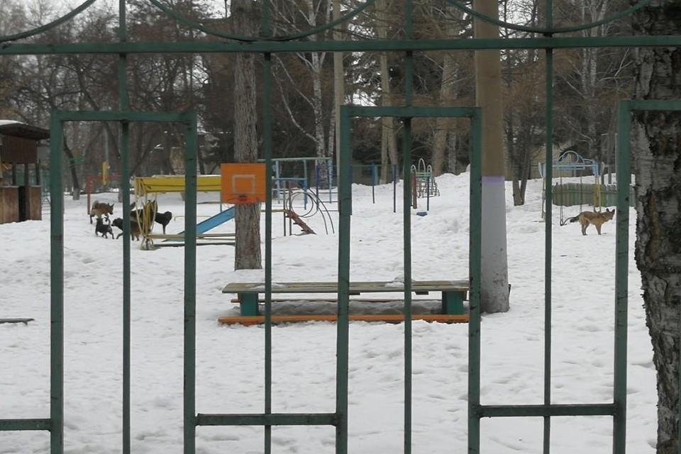 """В городе Обь бродячие псы гуляют в детском саду. Фото: """"Город Обь Онлайн""""."""
