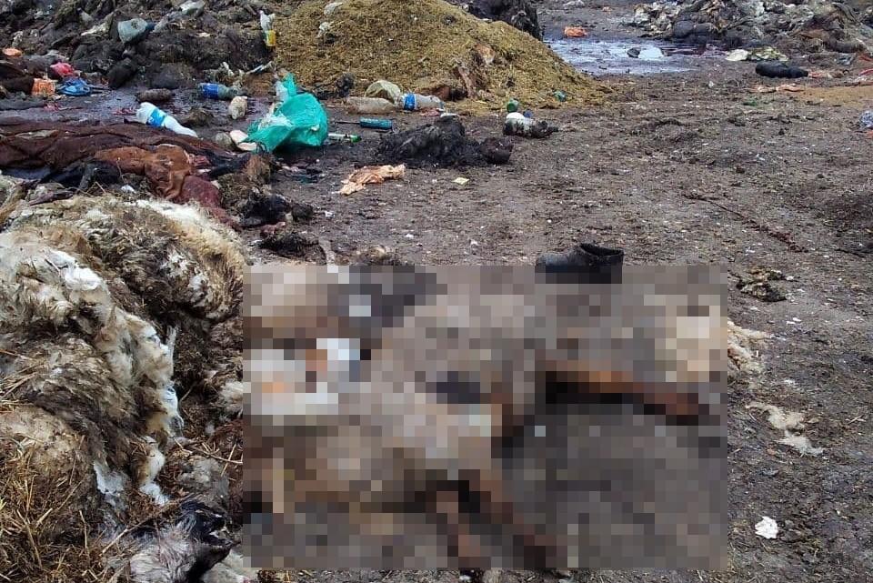 Свалка в Раздольненском районе существует давно. Фото: «Плохие новости  Жесть. Крым»/ «Вконтакте»