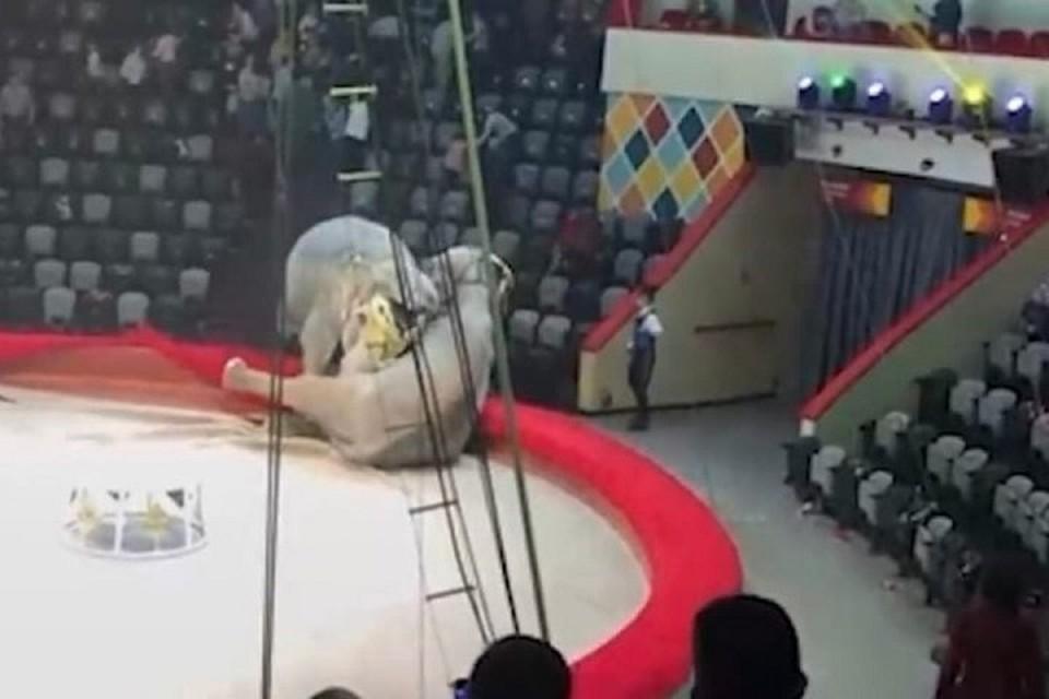 В первый раз слонихи подрались между собой.
