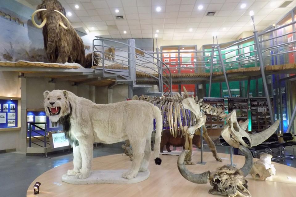 Айсен Николаев: «Мы увидим живых мамонтов, идущих по якутской тундре» ФОТО: музей СВФУ