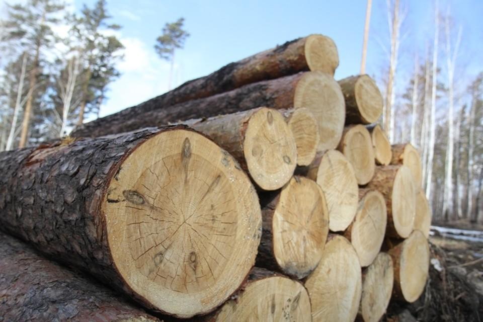 Иркутский областной суд заменил осужденным черным лесорубам условный срок на реальный