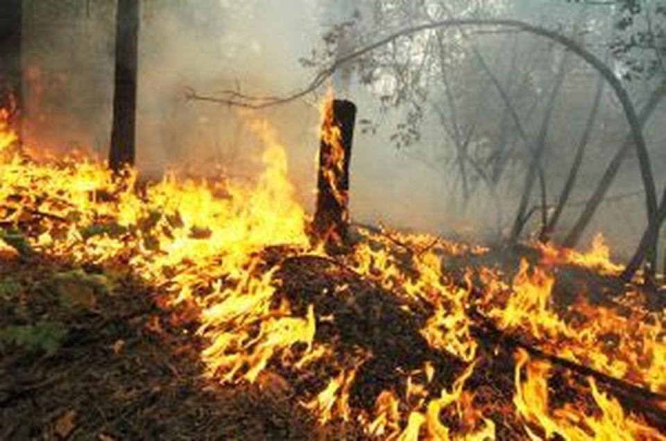 12 природных пожаров ликвидировали в Приморье за 4 апреля