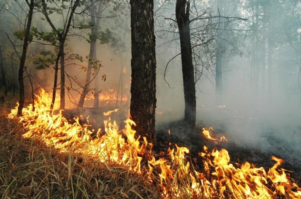 Отжиги сухой растительности в Приморье будут расследовать