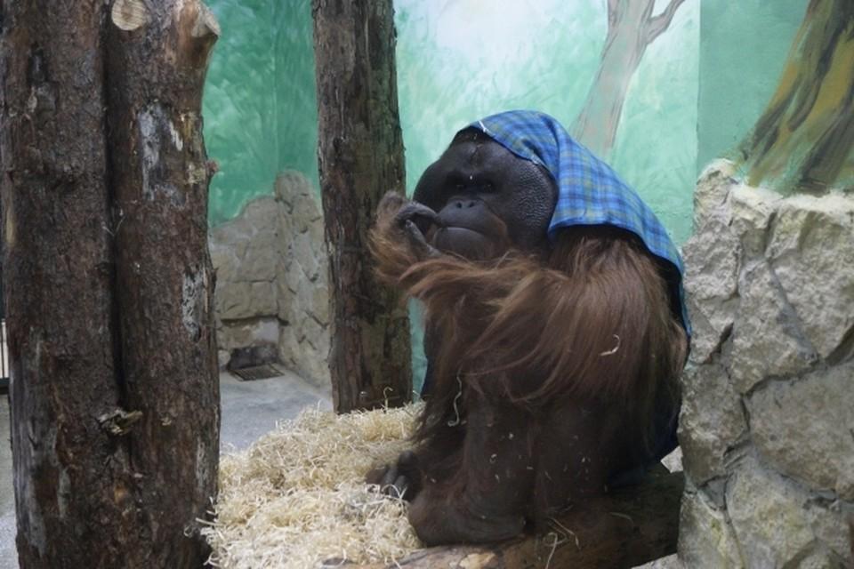 Исследования нового препарата, максимально приближенные к реальной ситуации, ученые проводили на пожилых приматах