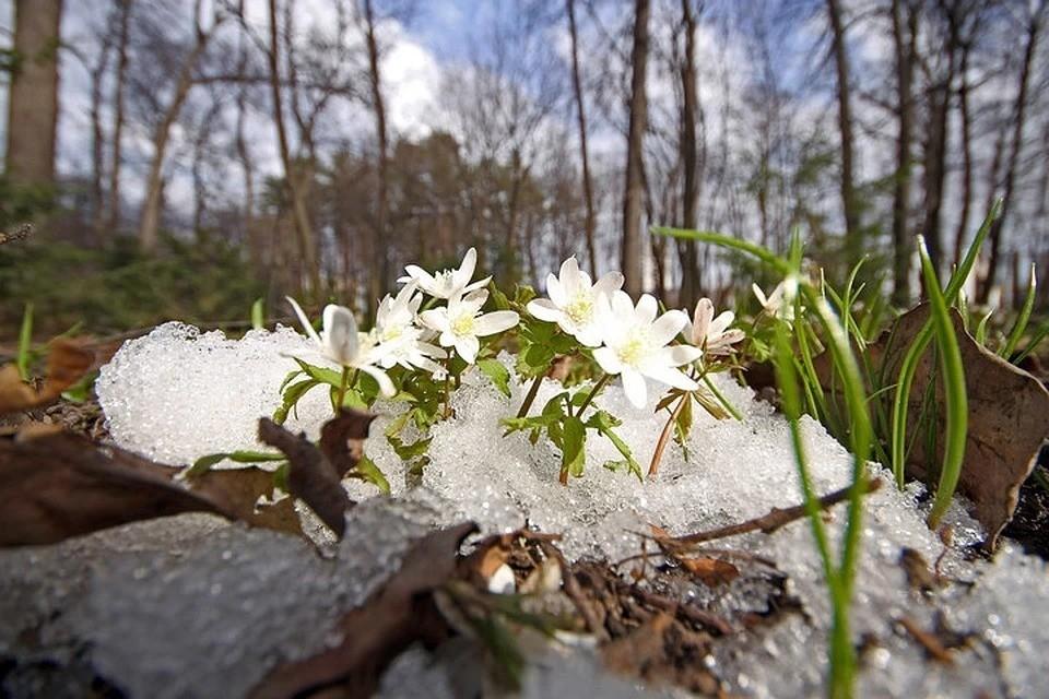 Потепление в Башкирию придет уже завтра, 9 апреля