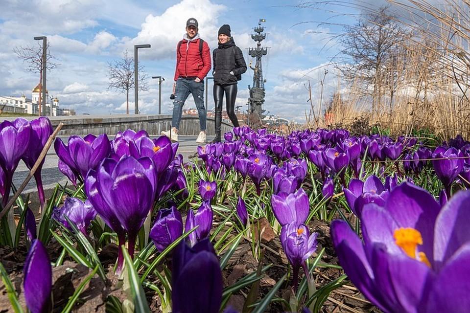 Москвичам пообещали солнечные и теплые выходные