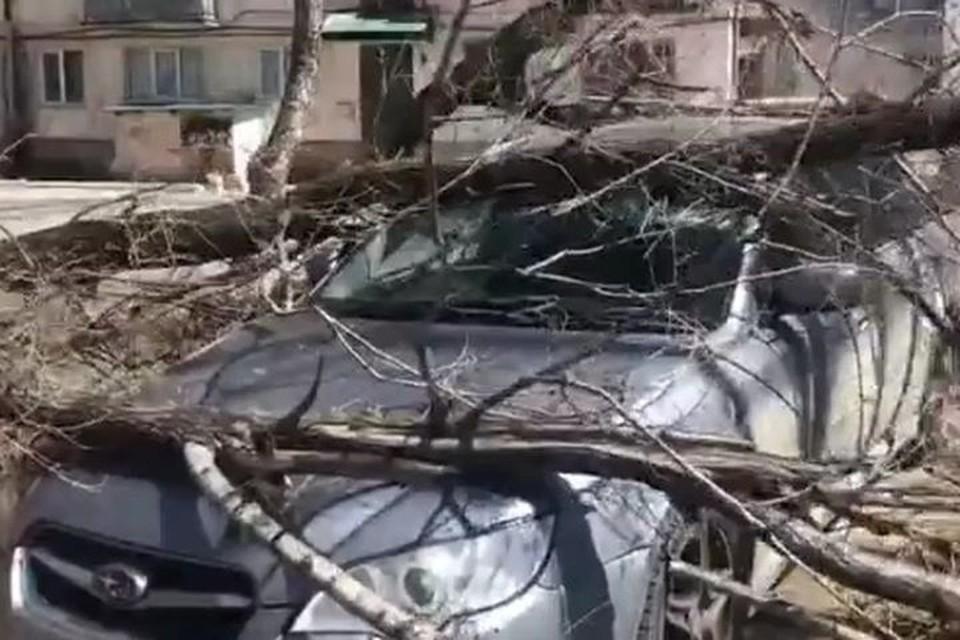 сильный ветер повалил деревья в Приморье.