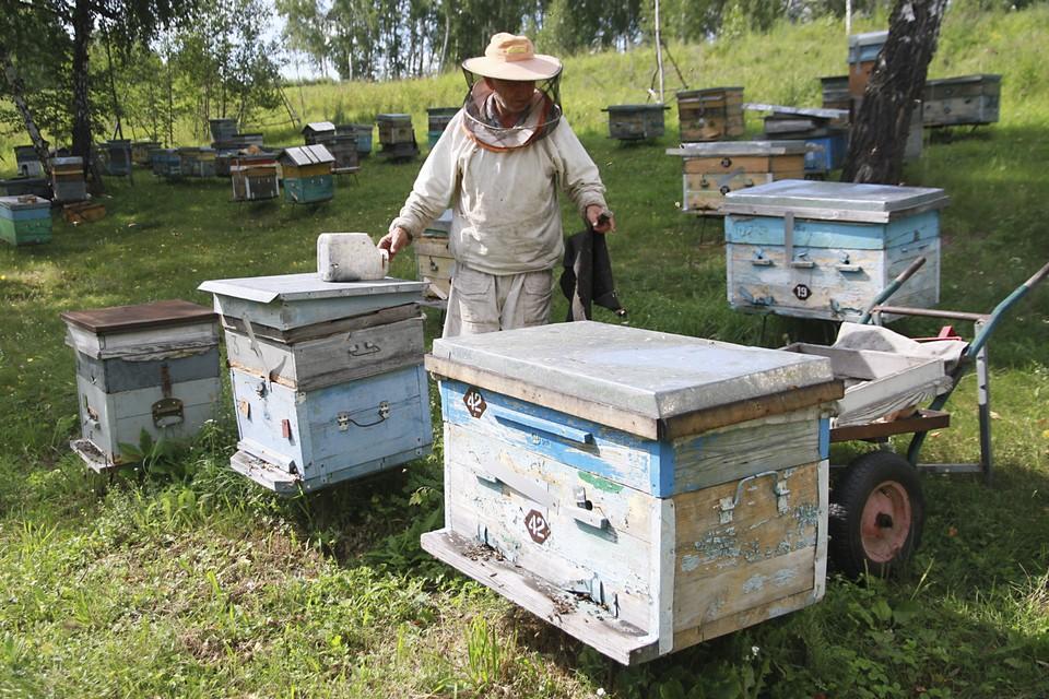 Поводом для создания ФЗ стали случаи массового отравления пчел в 30-ти регионах страны, в том числе, в Белгородской области.