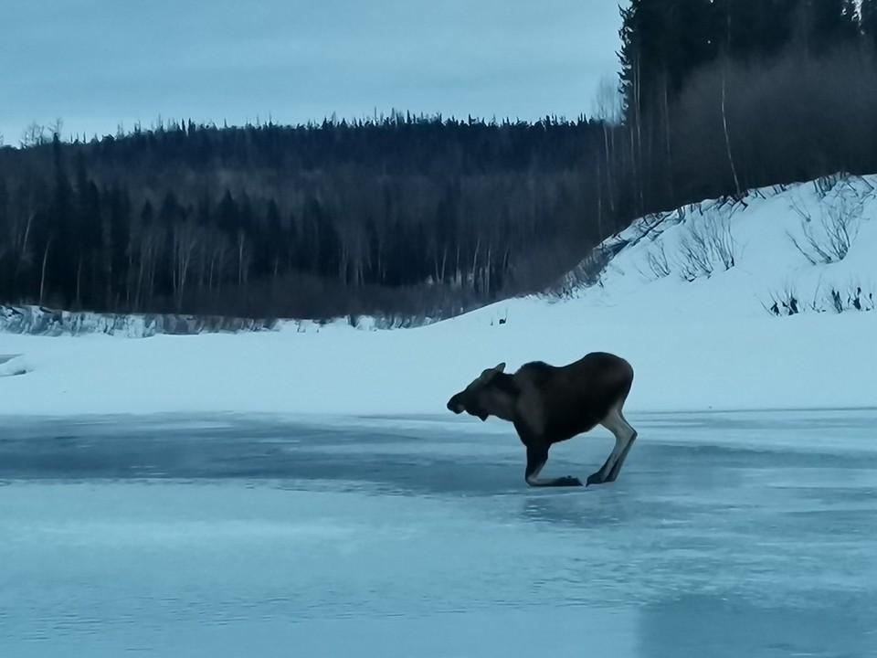 Фото: заповедник «Центральносибирский»