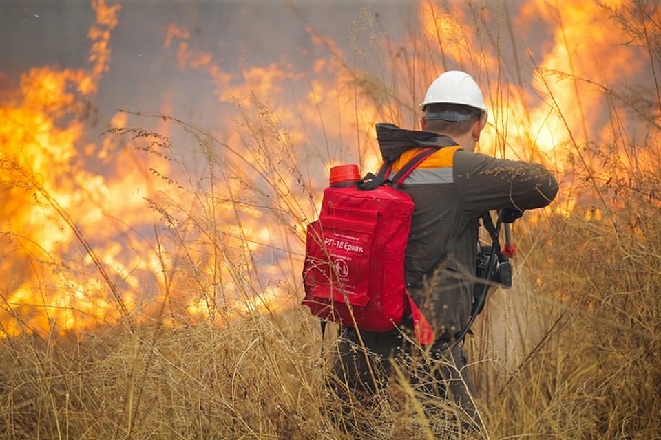 На всей территории региона действует особый противопожарный режим. Фото: Денис Нагаев/правительство Приморья.