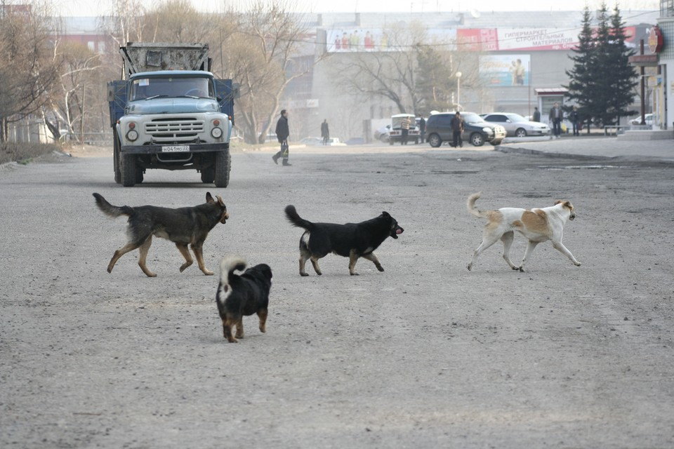 ЧП произошло 19 апреля в местном парке «Прометей»