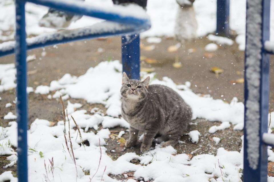 В Кирове может выпасть до 1 см снега.