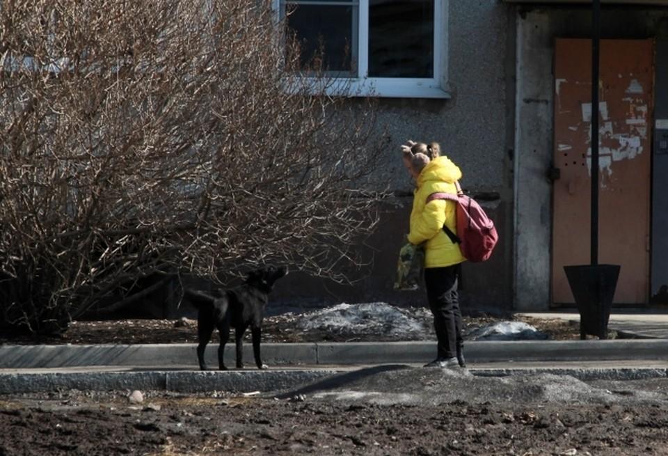 Прокуратурой города Сосногорска проводится проверка по факту укуса бродячей собакой 9-летней девочки