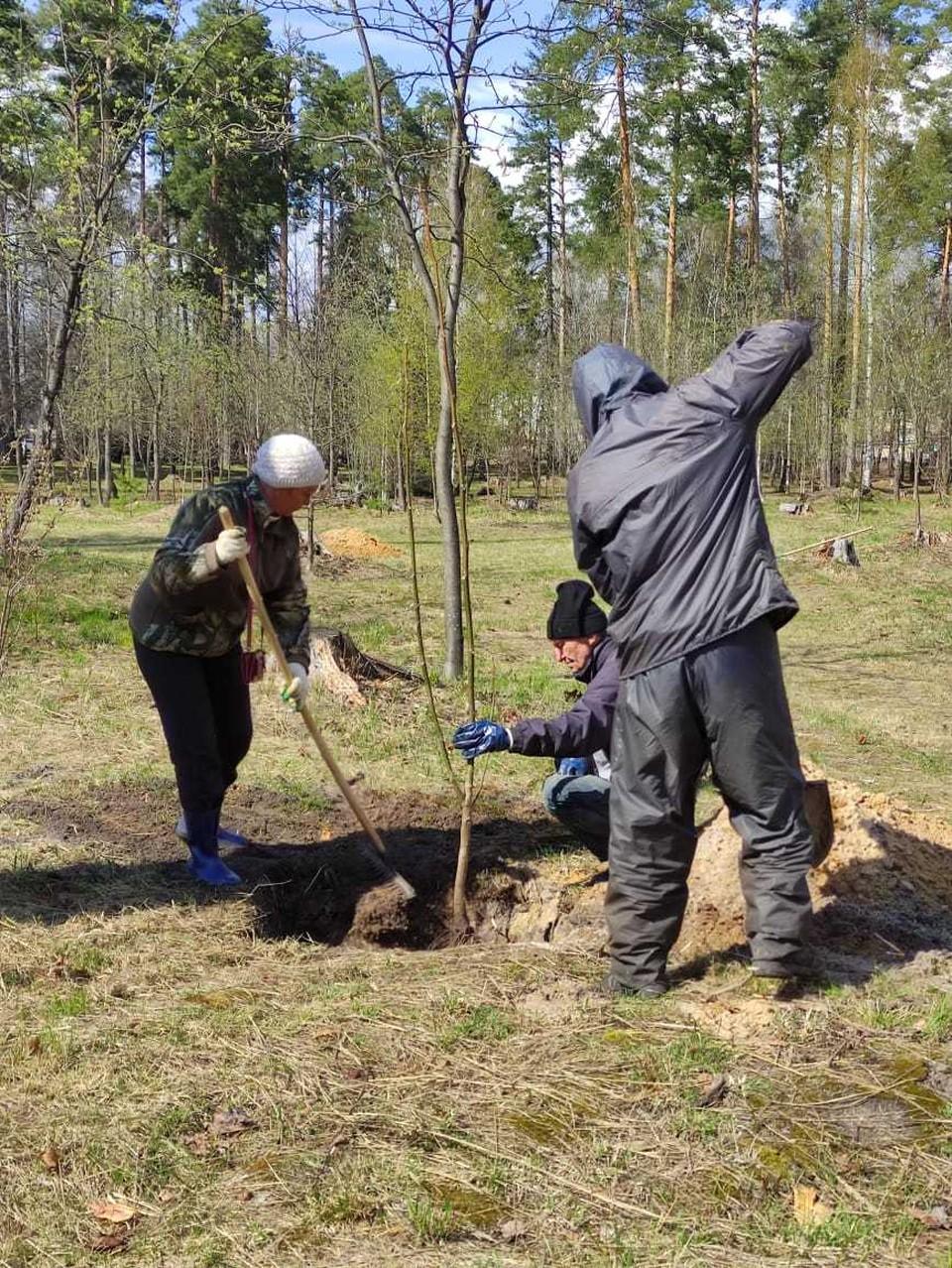 Житель Выксы подарил благоустроенному парку саженцы грецкого ореха.