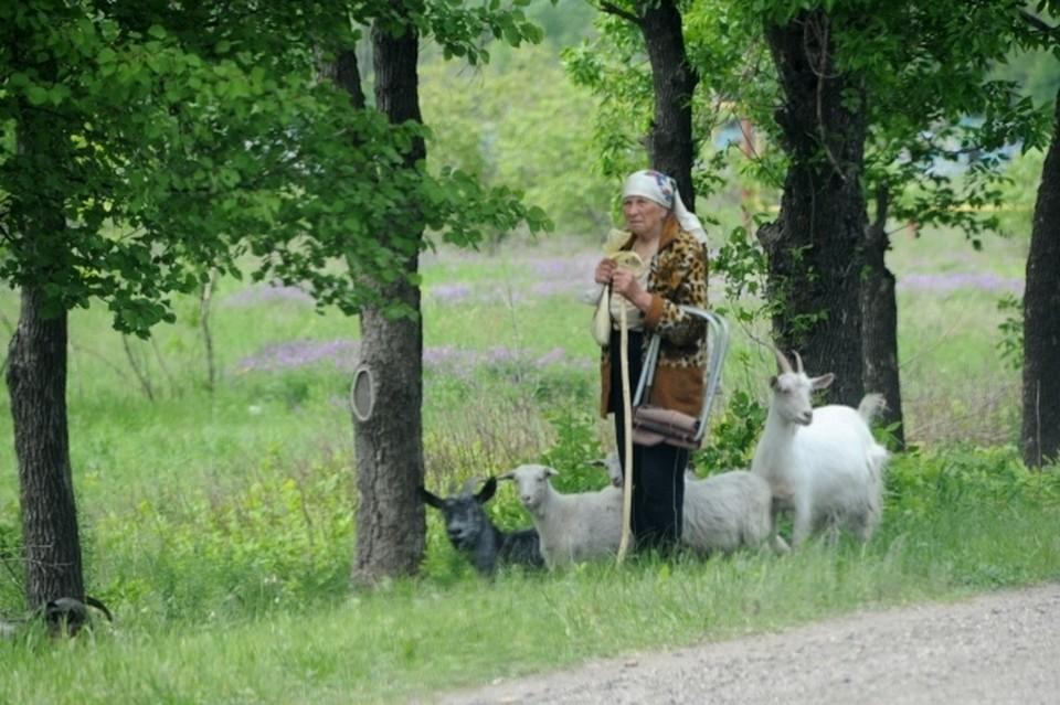 Мужчина и женщина отправились в лесополосу для выпаса домашнего скота (архивное фото)