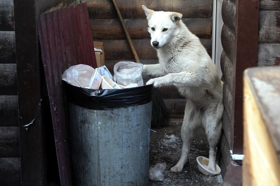 Мужчина не испытал сострадания к бездомной собаке