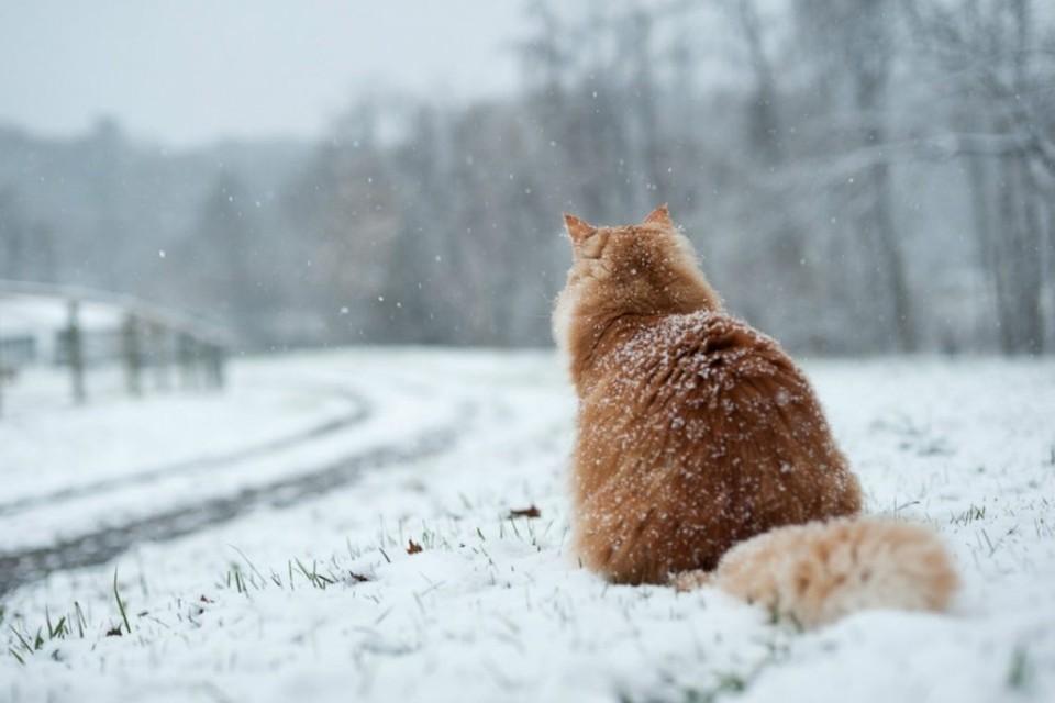 Синоптики обещают облачность и даже небольшой снегопад