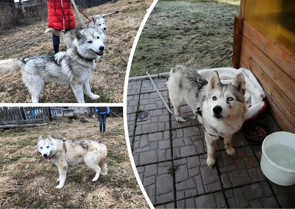 Фото: приют для собак «Друг»