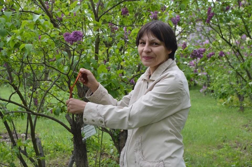 Елена Виноградова повязала георгиевскую ленточку на куст сирени «Алексей Маресьев». Она названа в честь погибшего летчика, потому что цветки напоминают пропеллеры самолета