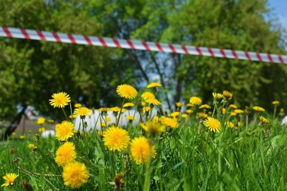 Дачников предупредили о штрафах за мяту и одуванчики на участках