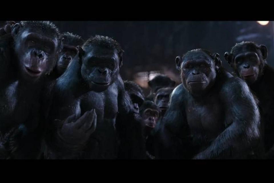 Среди обезьян нашлись агрессоры, желавшие захватить чужие территории.