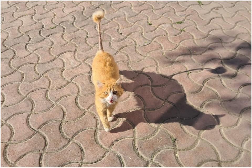 В Евпатории живут модные бездомные коты. Фото: Евпатория Подслушано и Подсмотрено/VK