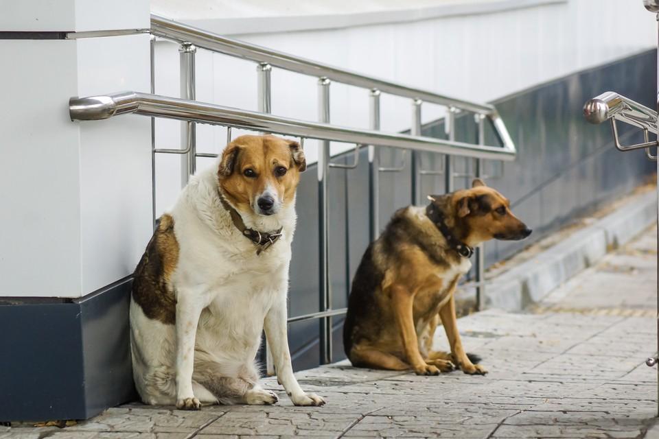 Более тысячи собак планируют отловить до конца года