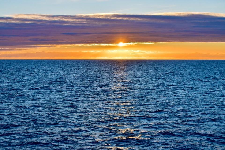 В Баренцевом море обитают удивительные существа.