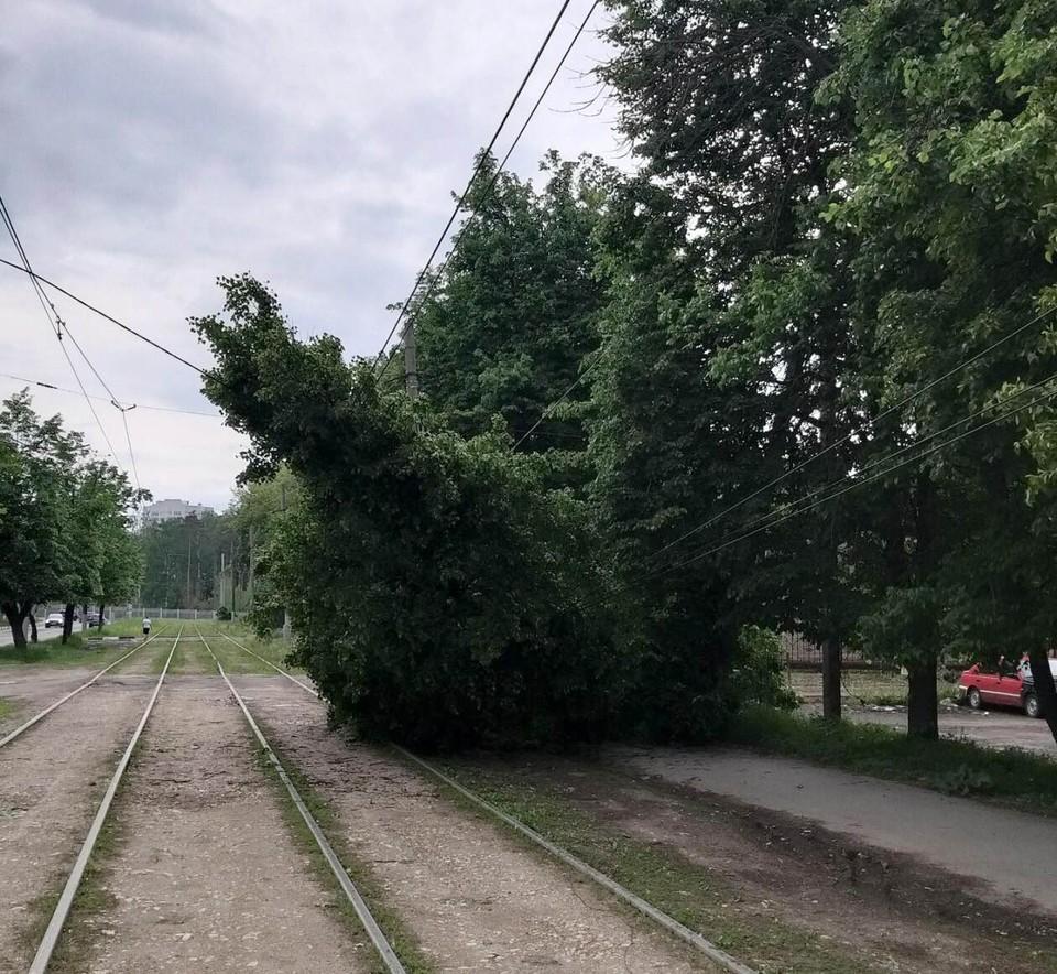 Обрушившееся из-за грозы дерево в центре Тулы парализовало трамвайное движение