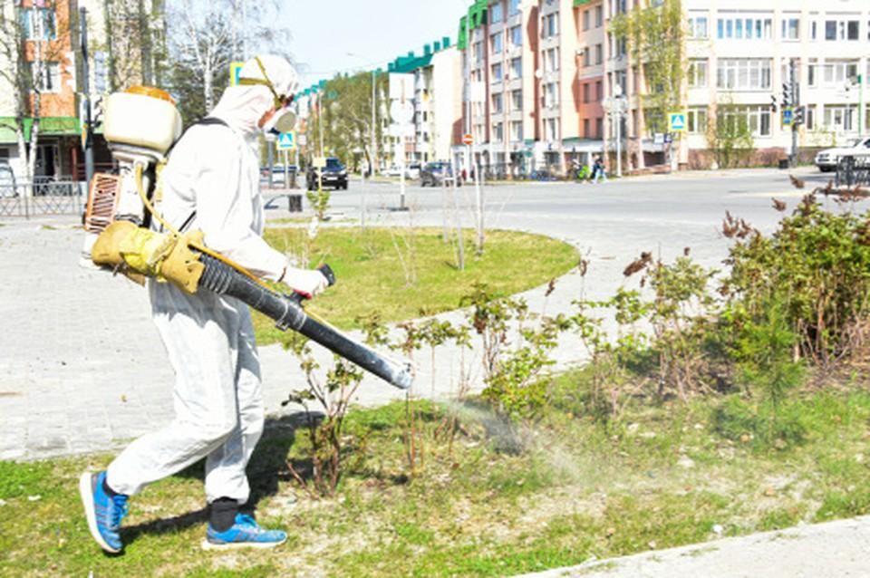В Ханты-Мансийске борются с клещами и комарами Фото: пресс-секретарь Главы города Ханты-Мансийска