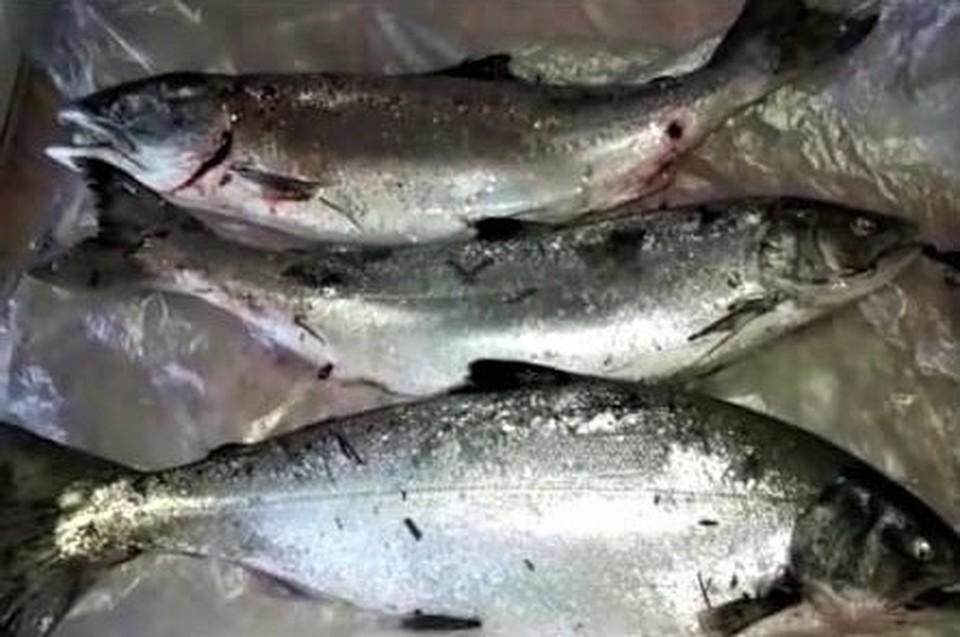 Крупная рыба попадается на западном побережье Сахалина