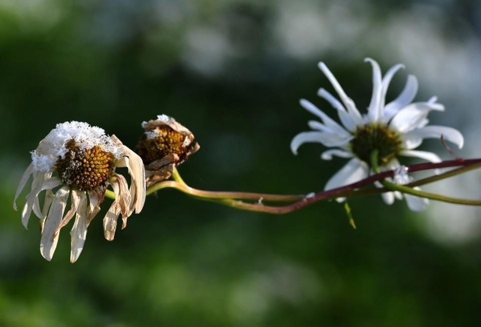 Заморозки могут повредить сельскохозяйственным растениям.