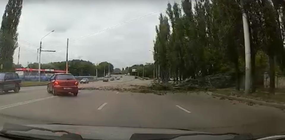 Нескольким машинам пришлось объезжать упавшее дерево по встречной полосе.