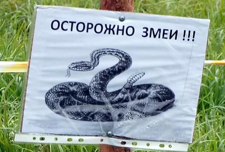Змеи проснулись и частенько подбираются к людскому жилищу