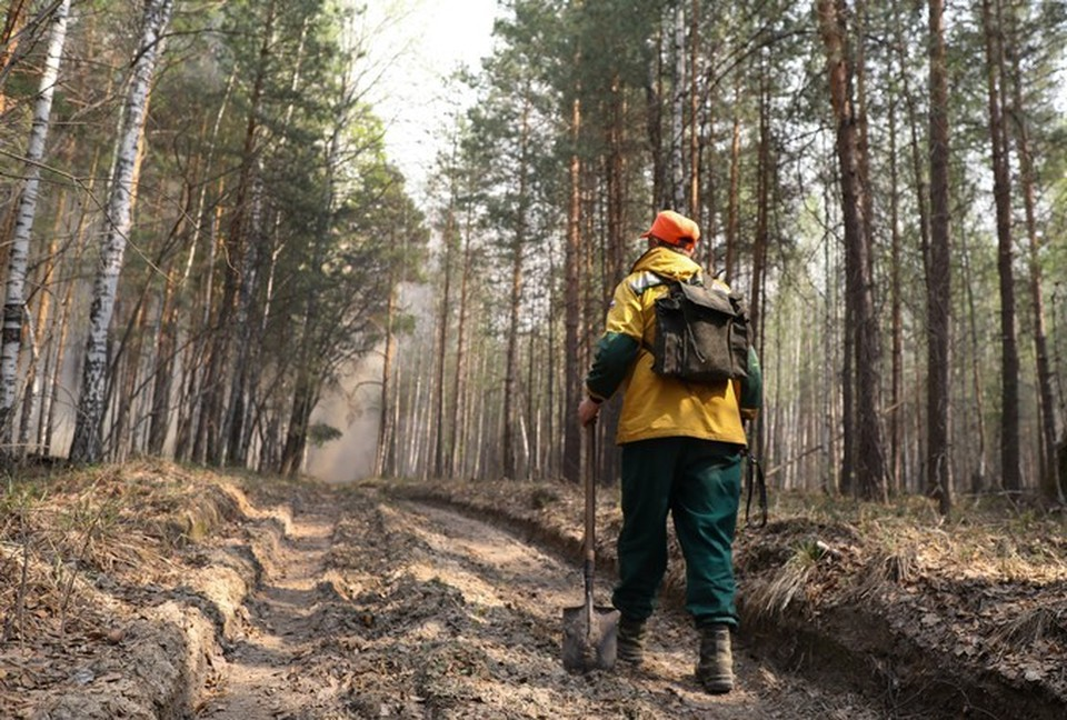 В Тюменской области пострадавший при тушении пожара лесник получит награду. Фото Екатерины Христозовой.