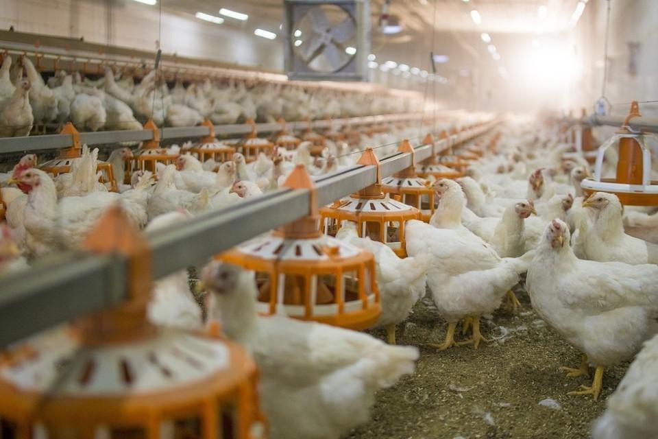 Наибольшая доля поставок приходится на мясную продукцию. Фото: Минсельхоз СК
