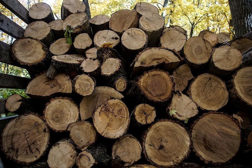 В Тверской области будут укреплять деревоперерабатывающую отрасль.