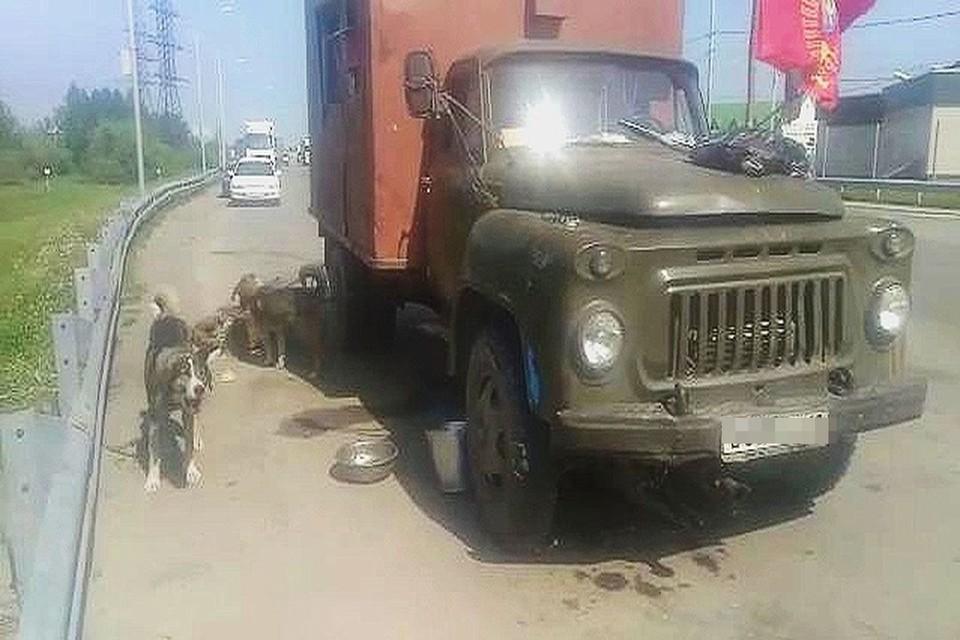 Под Новосибирском на трассе застрял грузовик с 70-летним пенсионером и семью собаками. Фото: предоставлено героем публикации