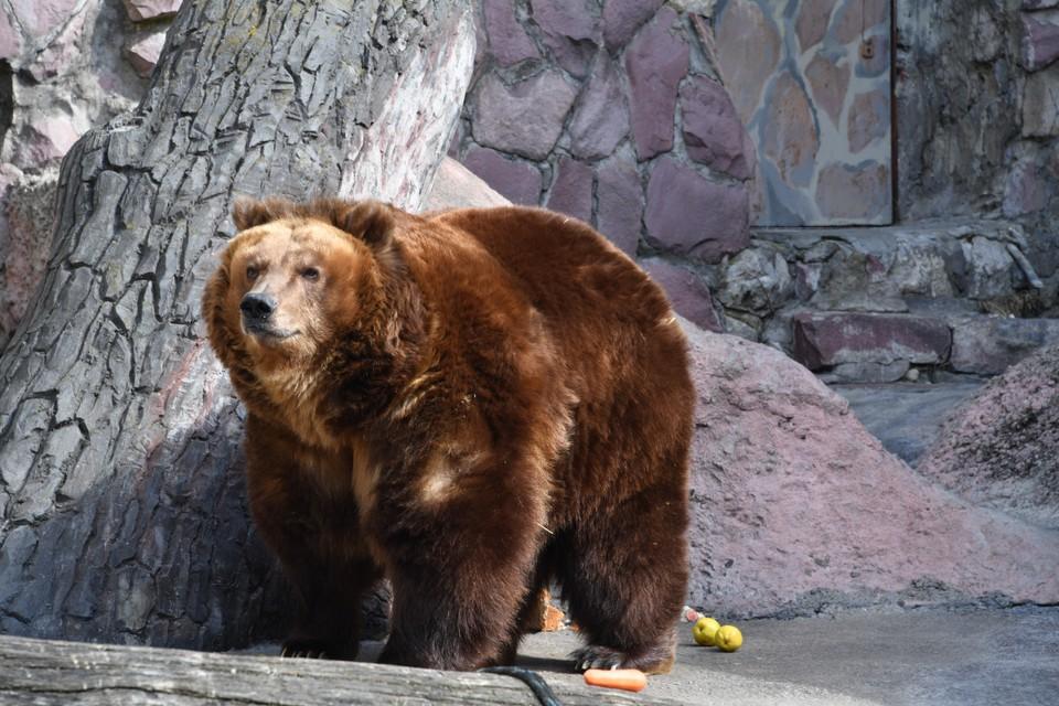 В зверинце уже расследовали жестокое обращение с бурыми медведями