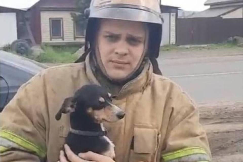"""""""Сделал Шарику массаж сердца"""": пожарный в Иркутской области спас собаку из горящего дома."""