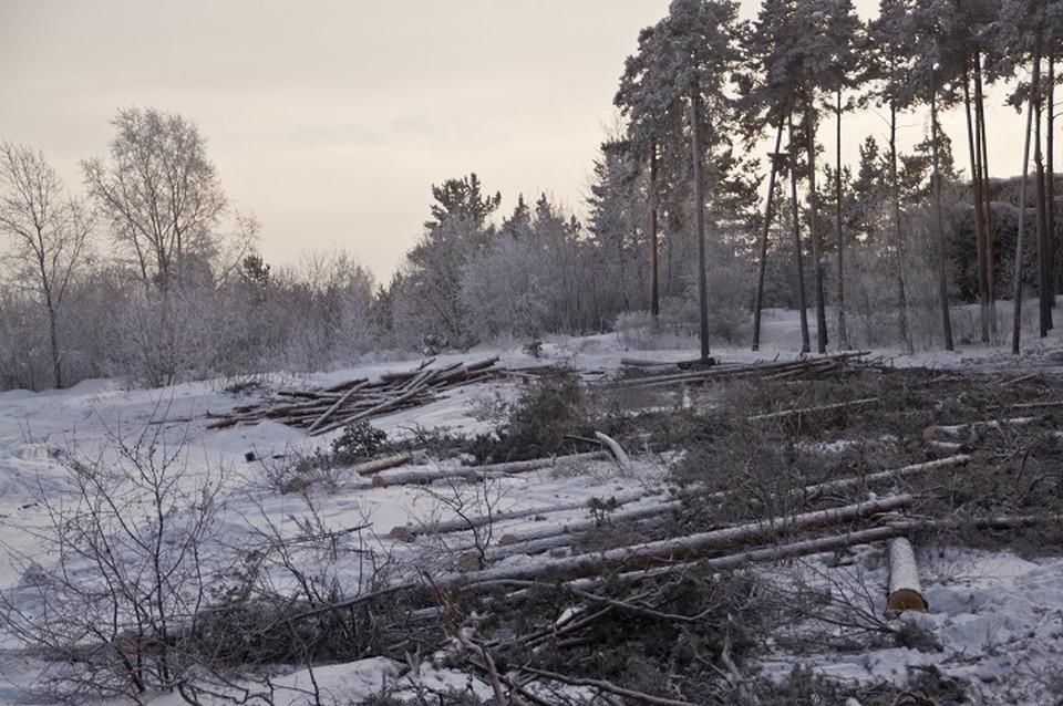 «Байкаловскому лесничеству» причинен ущерб на общую сумму свыше 120 тысяч рублей