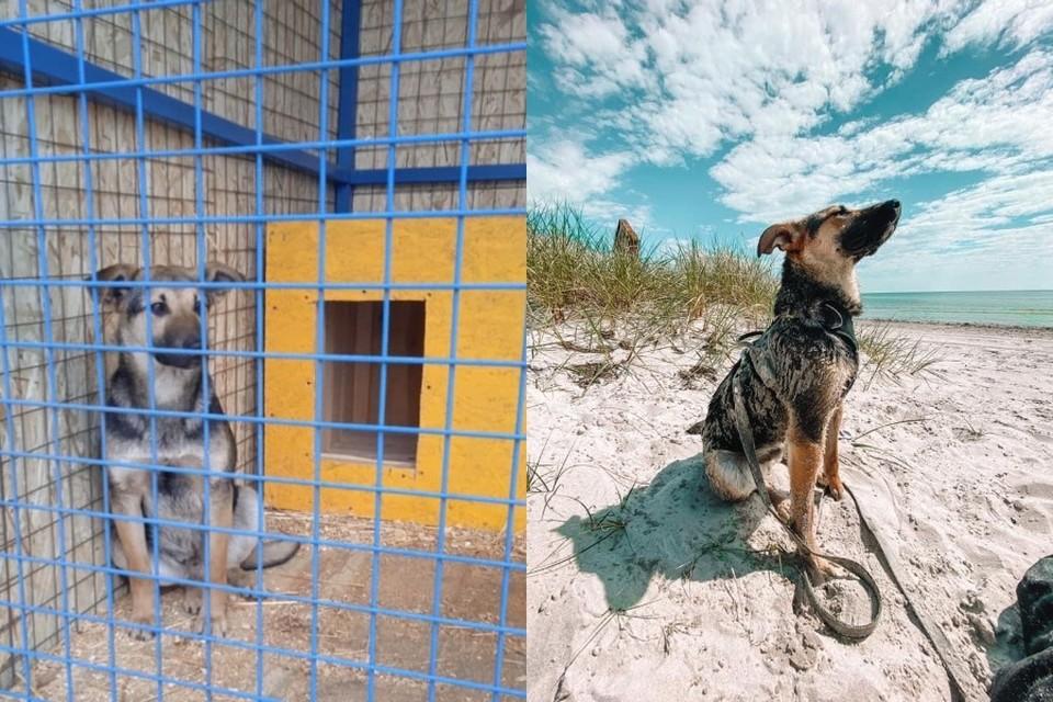 До и после. Фото: волонтеры.