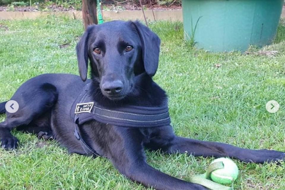 Ростовский пес стал счастливым обитателем Германии. Фото: ЦБЖ