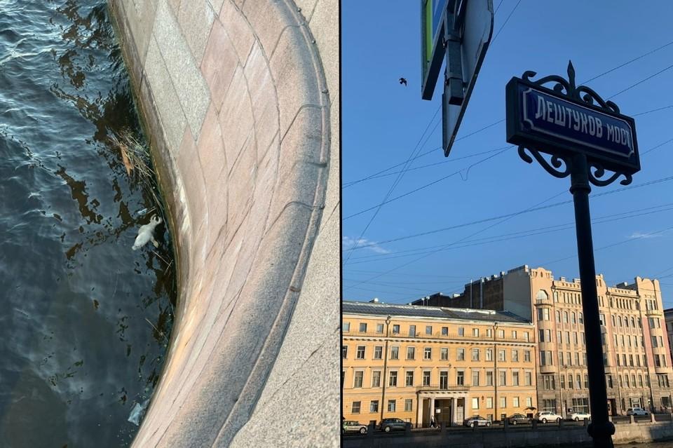 В центр Петербурга прибило труп нерпы. Фото: vk.com/spb_today