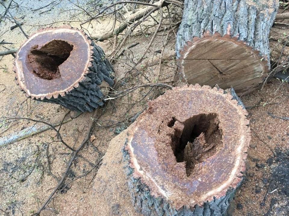 В Горпарке срубили опасные деревья