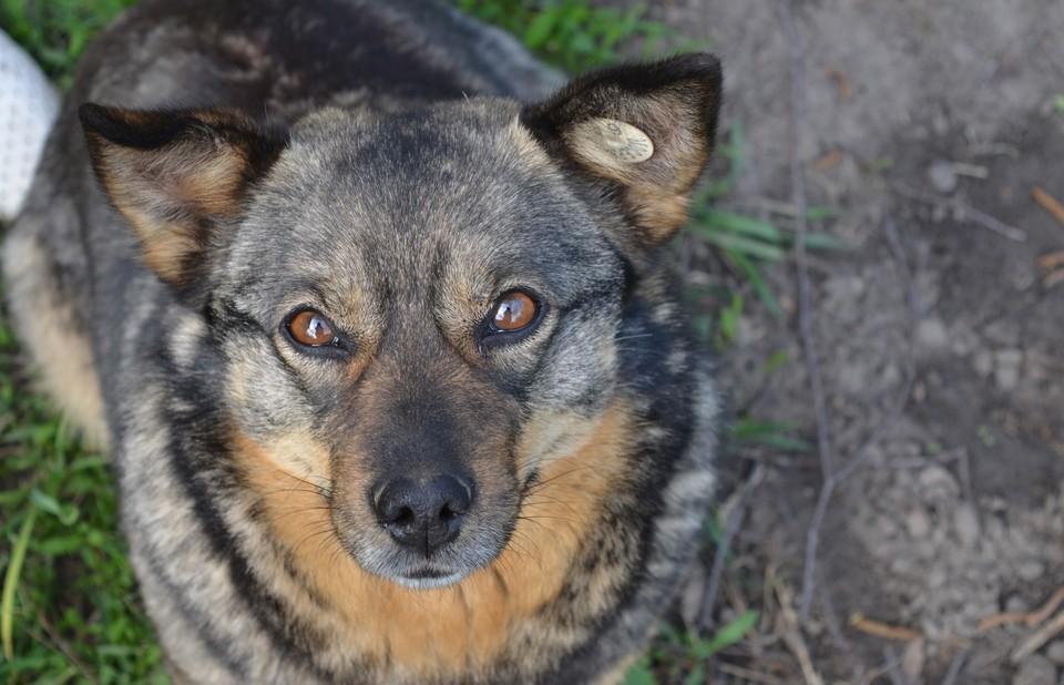 Специальные проект расскажет о бездомных собаках: можно забрать питомцев себе, стать волонтером или куратором