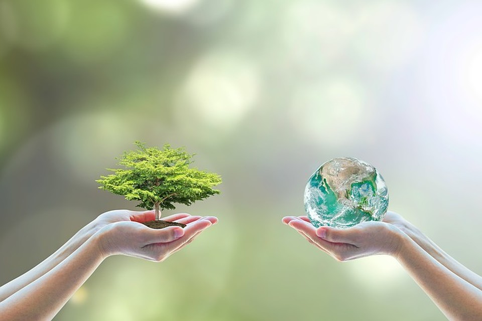 Охрана окружающей среды – одна из самых главных задач государства. Но еще важнее, что каждый из нас может внести свой вклад в сохранение природы.