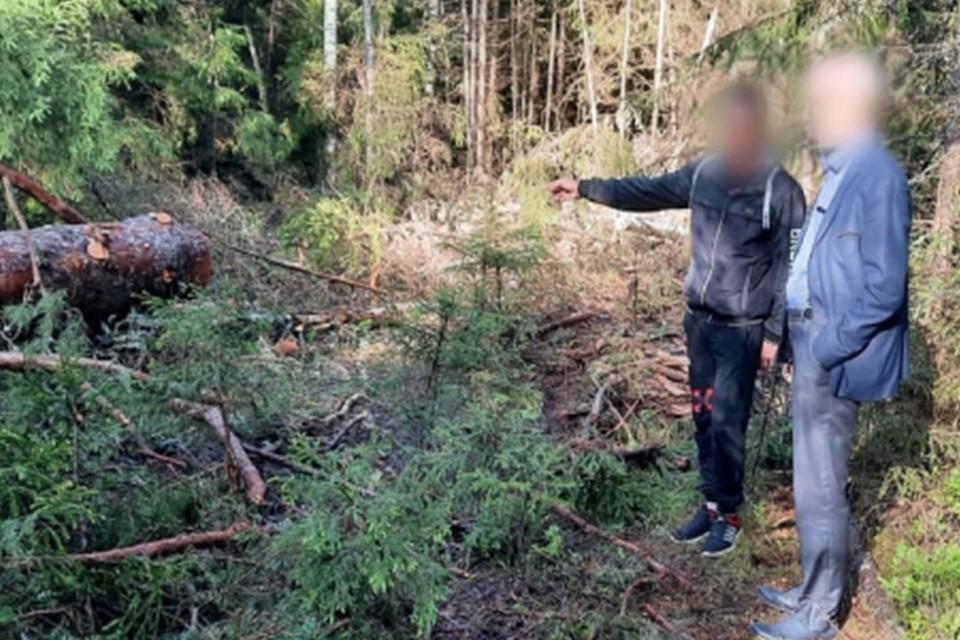 Мужчина пилил лес для личных нужд Фото: УМВД России по Тверской области