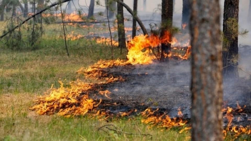 В Тюмени в выходные усилят патрулирование городских лесов.